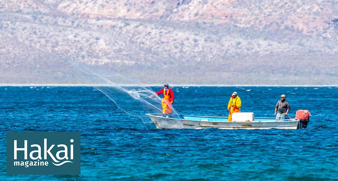 A New Idea to Save Endangered Fish: Pay Fishermen to Retire | Hakai Magazine