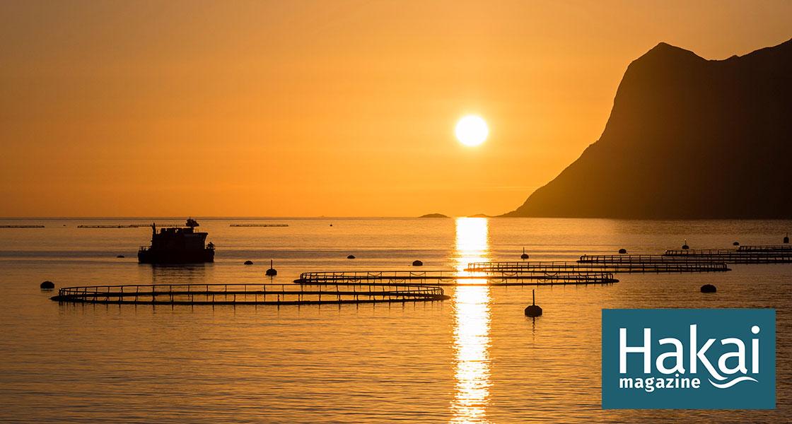 The Aquaculture Industry Needs a Heat-Loving Salmon - Hakai Magazine