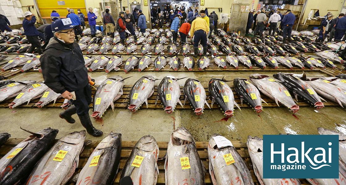Japan Has an Illegal Seafood Problem   Hakai Magazine