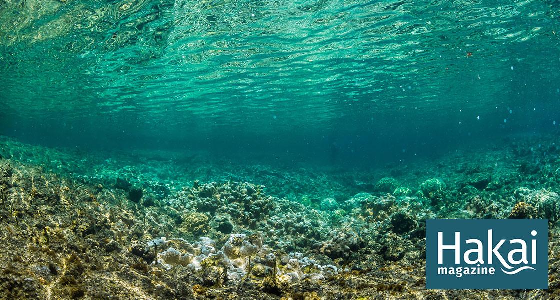 Photosynthesis Makes a Sound | Hakai Magazine