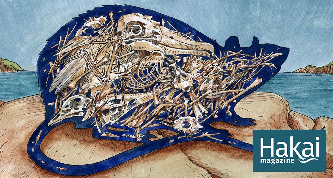The Rat Spill | Hakai Magazine