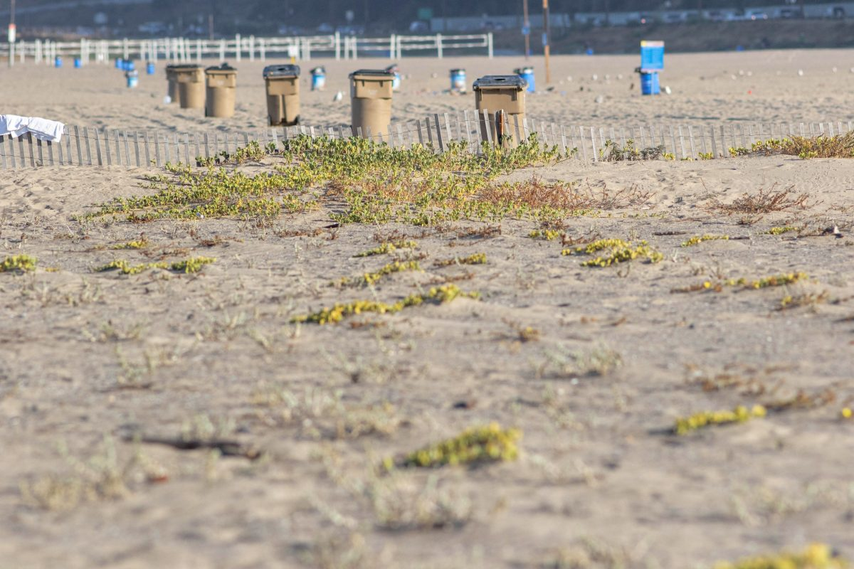 an ungroomed section of Santa Monica Beach