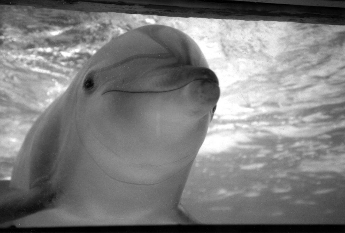 Kelly the dolphin at Marine Life Oceanarium